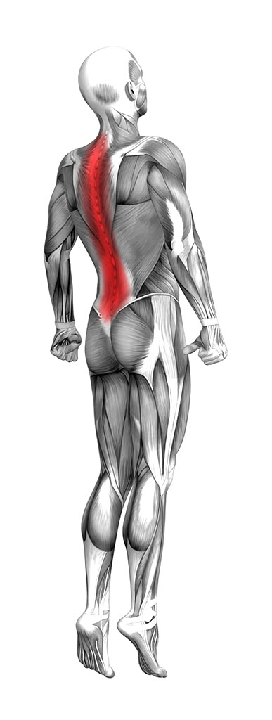 Illustration of the anatomy of a skinless man with back pain showing muscle anatomy with a red blurry area representing pain